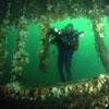 1 dive site