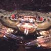 crabda01