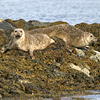 phcommonseal
