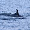 phminkewhale